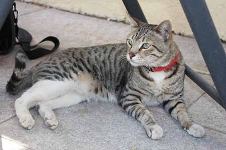 Katten Smedley